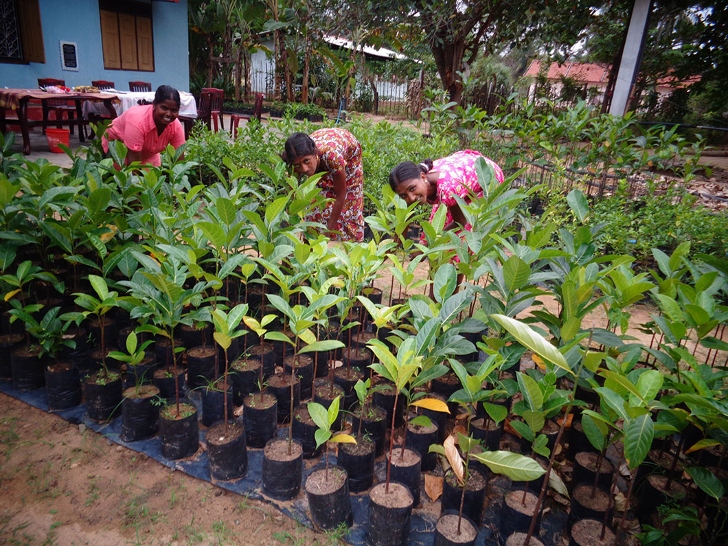 Plant Nursery initiated by RAHAMA together with district authorities